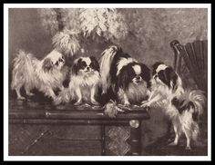 Japanese Chin Dog Group Lovely Vintage Style Sepia Dog Print Poster | eBay