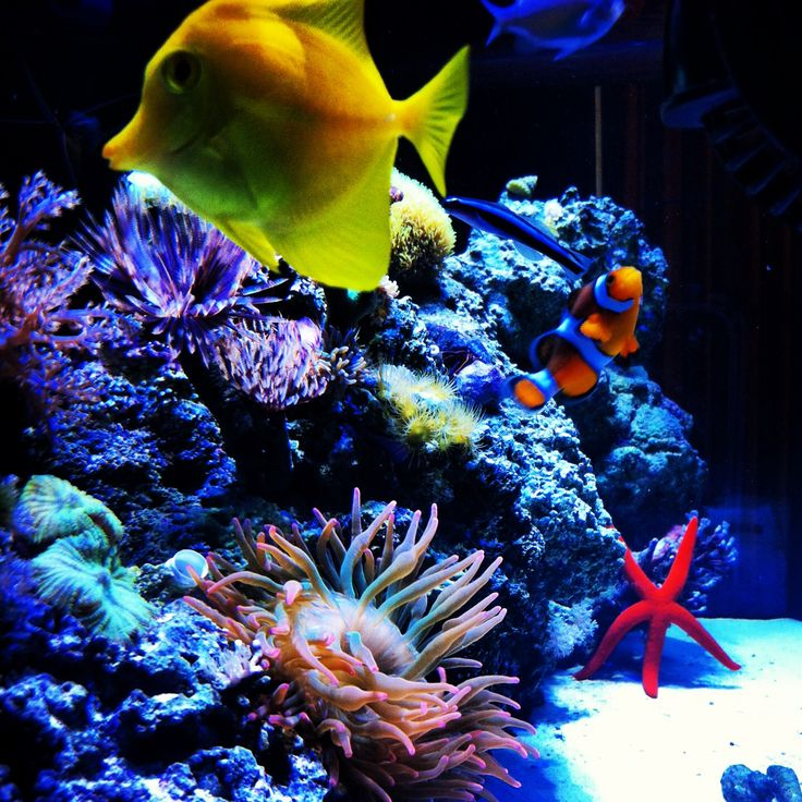 Mi acuario ❤️