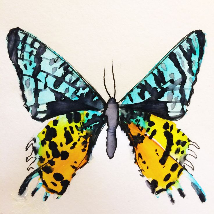 Butterfly!! Sketchbook – Crystal Smith Check out the sketchbook for more! #sketch #sketchbook #drawing #draw #art