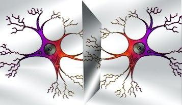 Neuronas Espejo.