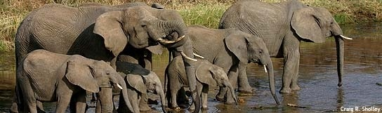 These giant creatures have a soft spot in my heart.  Some day, my African Safari trip will come true....*sigh*