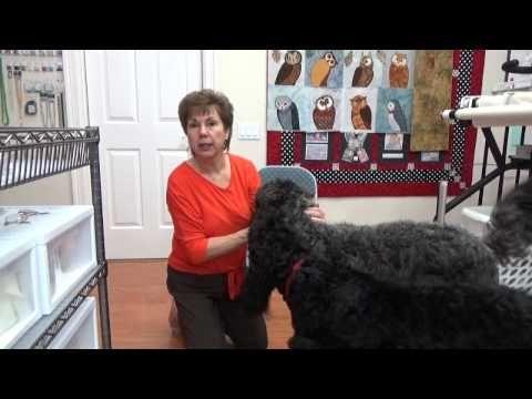 (21) Black Goldendoodles - YouTube