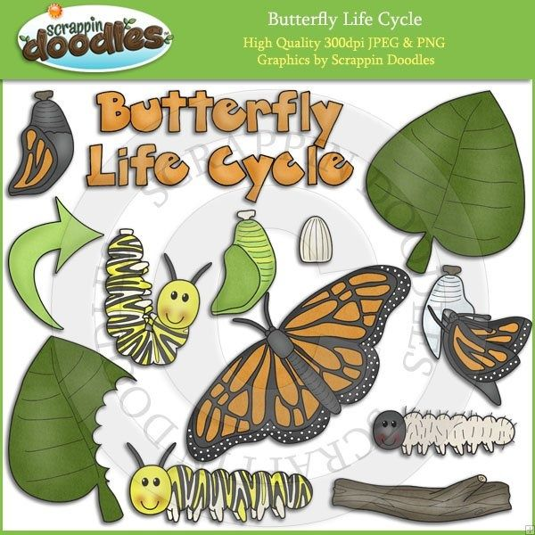 45+ Animal Life Cycle Clipart In Line