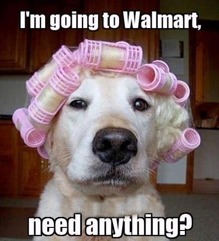 Funny Going To Walmart Curlers Dog Photo