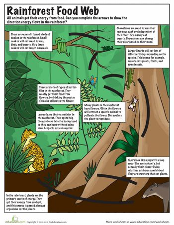 Worksheets: Rainforest Food Web