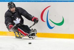 Steve Arsenault, sledge hockey
