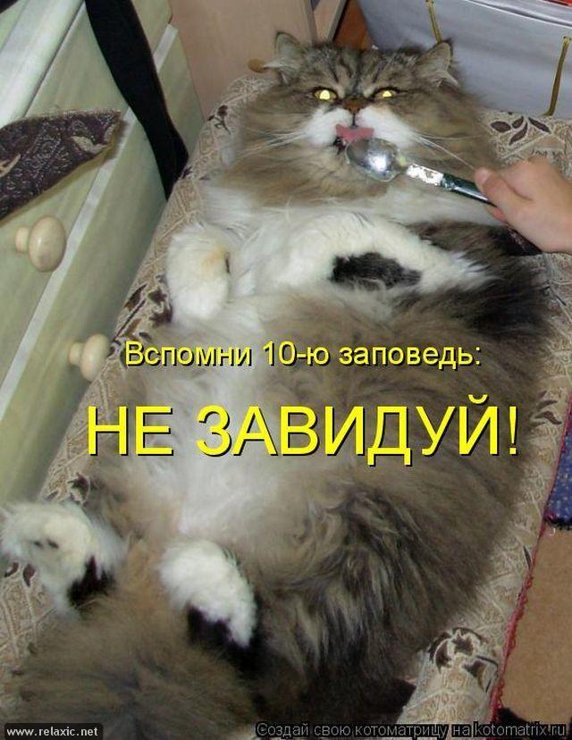 Приколы про животных фото с надписями