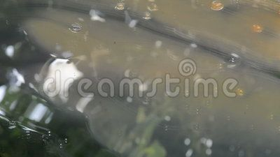 A continuous flow of liquids in a close up view on a reflexive and vegetation platform, no sound.