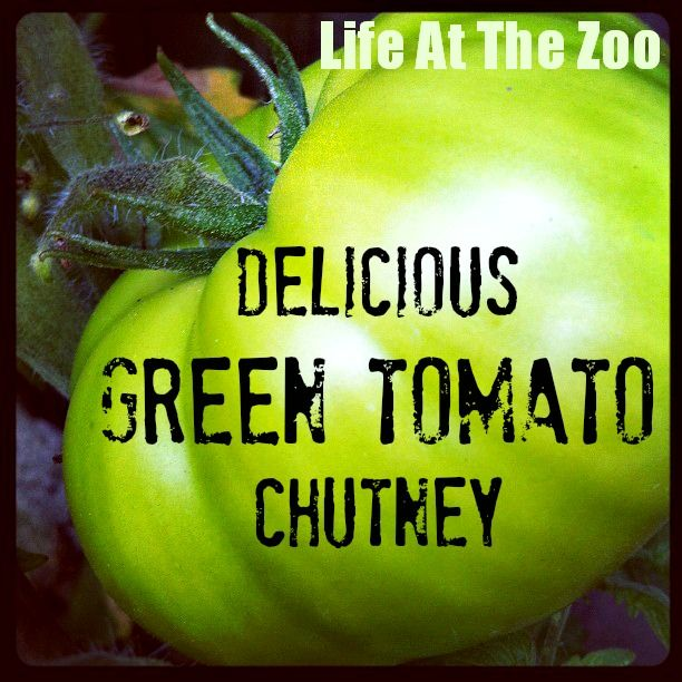 Looking for great Green Tomato Recipes, then you will love this delicious Green Tomato Chutney recipe. Simple to make. Tastes good. Great gift.