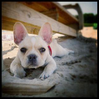 Dog - sweet photo