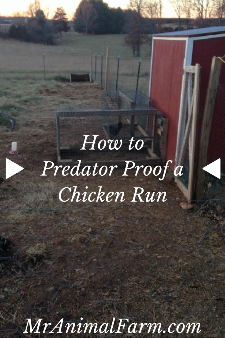 507 best the poultry guide images on pinterest raising chickens