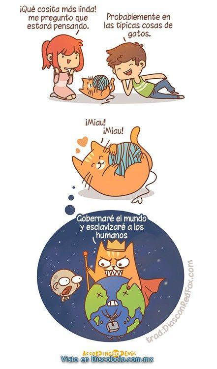 Algunas veces pensamos que los gatos son unas lindas e inocentes criaturas, sin embargo es parte de su malévolo plan de dominación mundial  Posts relacionados: Los gatos son malvados  En el fondo de esas adorables bolas de pelos, se... Don Meowconi  Como siempre que pensamos en los gatos como adorables criaturas,... Plan purrfecto  Los gatos son animales muy listos, prueba de ello son... Alergias  Cada cierto tiempo la gente sufre de alergias, sin embargo... Chompy  Incluso en el mundo de…