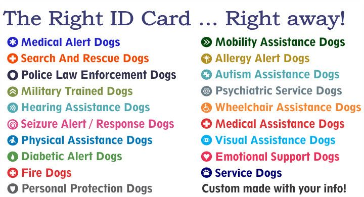 Service Dog Card Template Luxury Service Dog Id Card Gallery Service Dog Registry In 2020 Service Dogs Id Card Template Emotional Support Dog