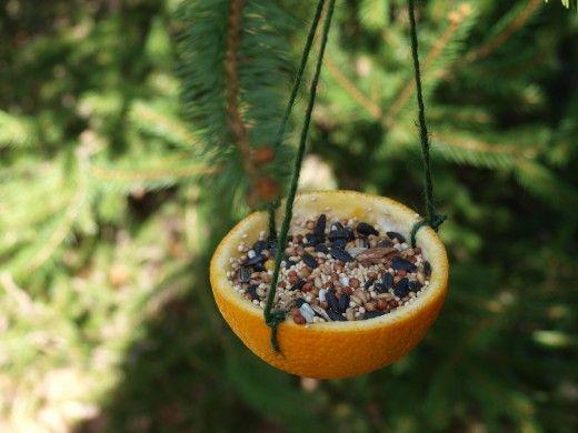 Krmítko pro ptáčky vyrobte z pomeranče