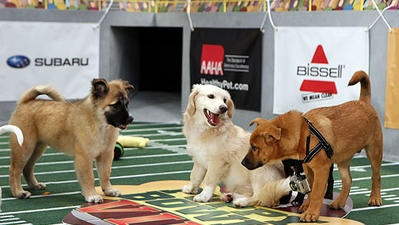 Animal Planet's 'Puppy Bowl IX' gets set for touchdown