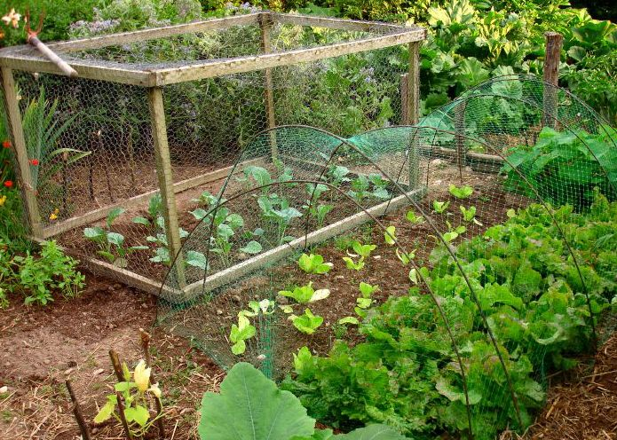 Home Gardening for Beginners | Vegetable Gardening for Beginners | First Home Buyer Hub