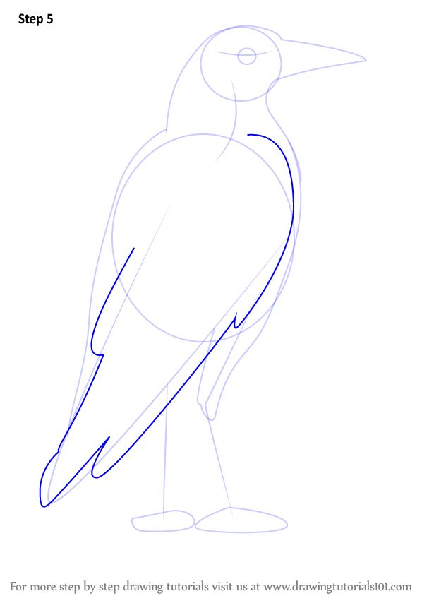Learn How to Draw an Australian Magpie (Birds) Step by Step : Drawing Tutorials
