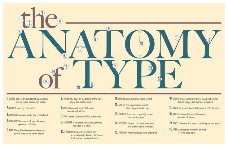 Type Anatomy Type Anatomy Pinterest