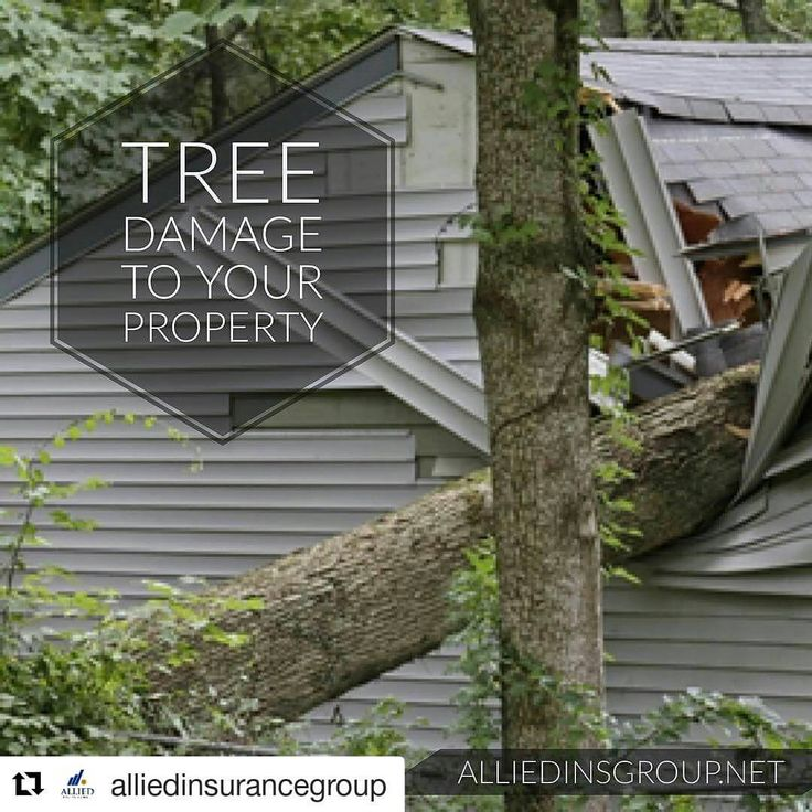 #Repost @alliedinsurancegroup with @repostapp ・・・ What Happens if a Tree Falls on My Home? . If a tree on your property falls and causes damage to your home, your homeowner's insurance policy should provide coverage for this loss. The usual policy of homeowners insurance is referred to as an all-risks policy of insurance, and such policy will provide coverage for all losses that are not specifically excluded by the terms of the policy. Since very few policies in Florida exclude coverage for…