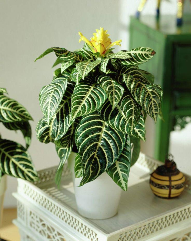 Exotische wohnzimmer zimmerpflanzen und die richtige for Zimmerpflanzen wohnzimmer