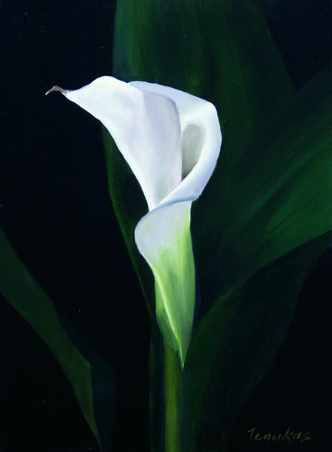 single-calla-lily-linda-tenukas.jpg (660×900) My favorite flower. If i could have these all over the house.
