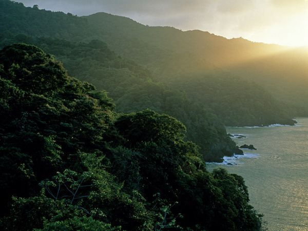 Sunlight filters over the forested seaside cliffs of Trinidad and Tobago.