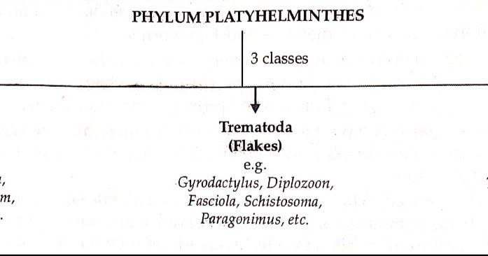 Melyek a helminták gyógyszerei mi lehetséges a pinwormsből