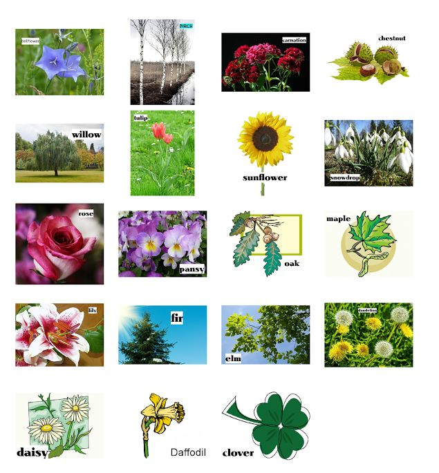 40 best images about plants trees flowers on pinterest for Different types of plants and trees