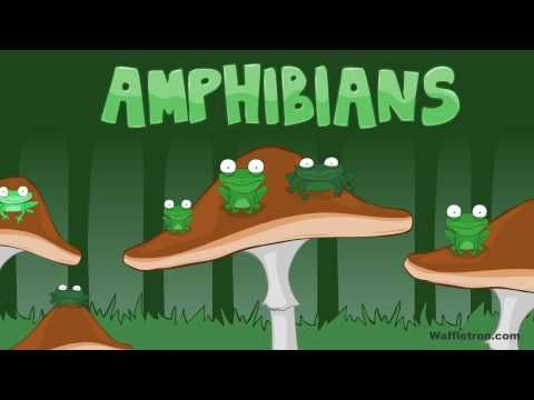 Toad, Frog, Pollywog - Amphibians Kids Song - YouTube. This was an instant hit with my kids, and quite an earworm, I'll warn you! lol