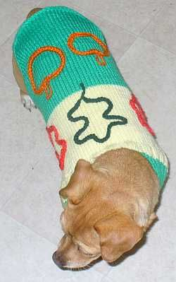 This easy knit dog sweater is part two of our basic dog sweater knitting pattern.
