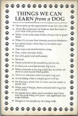 Things we can learn from a dog. by jditse