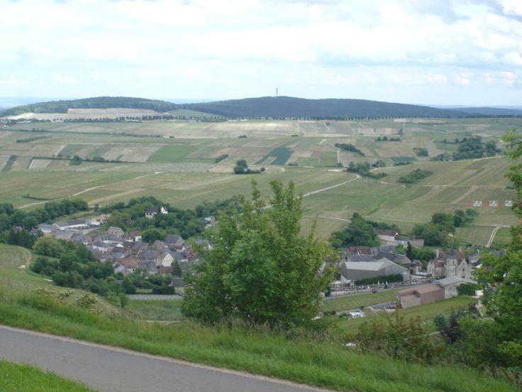 The Sancerre vineyards