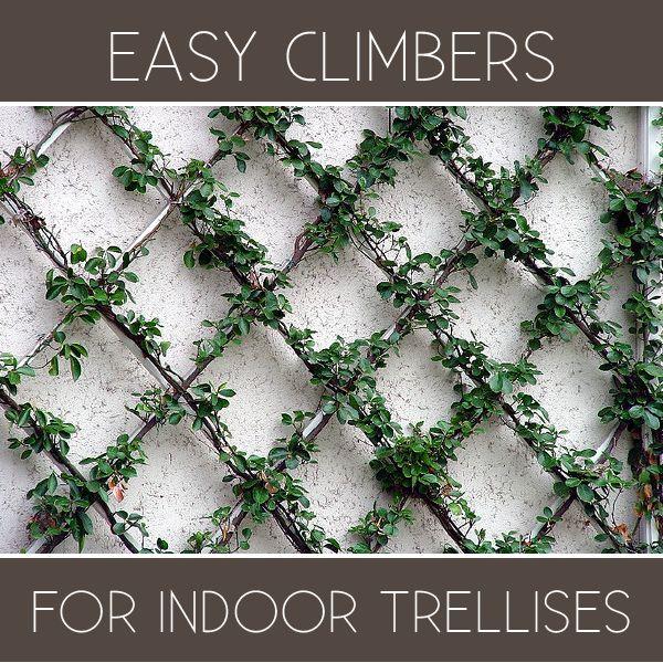 Great Plants For Your Indoor Trellis Designs Helpful