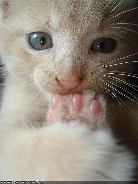 Mmmmm Toes : ) YEP! Instead of sucking my thumb as a baby, I sucked my toes... Haha