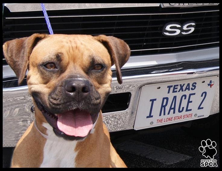 The Houston Chevelle Club Paid A Visit To The Houston Spca Today They Recently Held An Auto Show At Otto S Bbq In Stafford Texas And Rai Spca Animals Houston