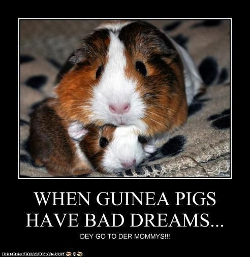 When guinea pigs have bad dreams, they go to their mommies. (Sorry, had to clean up the spelling. )