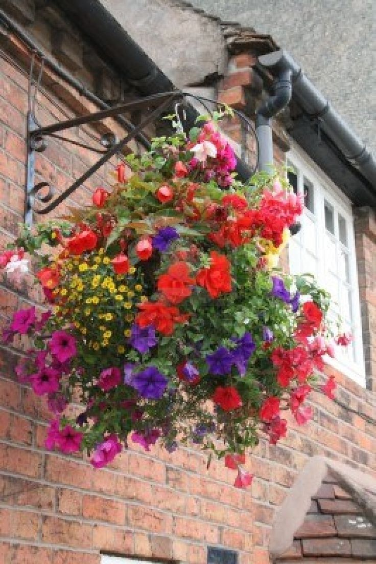 Hanging Flower Baskets Winter : Best images about hanging baskets on