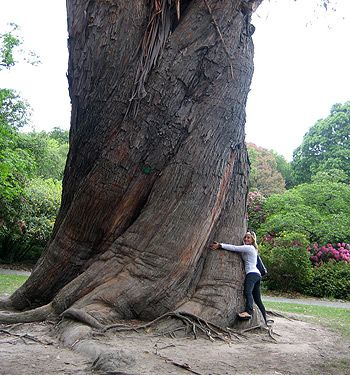 """Elephant's Foot"" Tree - Traveling Boy: Wendy Koro - The South Island of New Zealand"