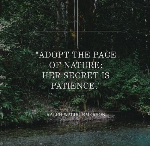 Adopt to the Pace of Nature...