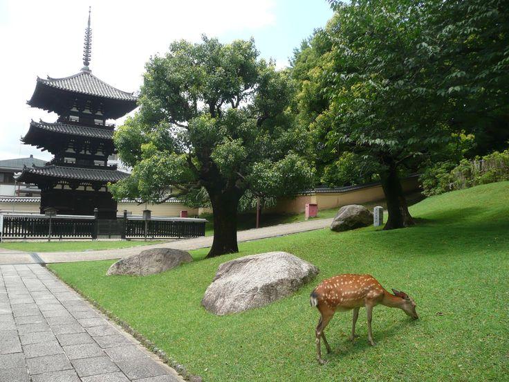 Parco di Nara - Nara, Giappone