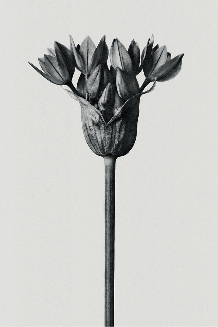 LOEWE 001 'Woman' Distinctive packaging features the photographic artwork of Karl Blossfeldt. Now available on loewe.com