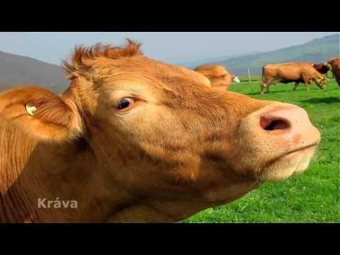 Poznávání zvířátek - YouTube