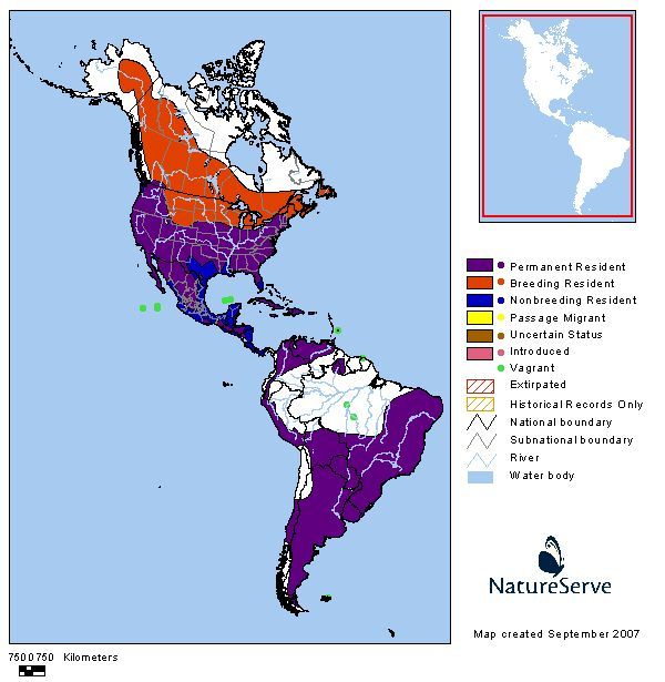 Comprehensive Report Species - Falco sparverius