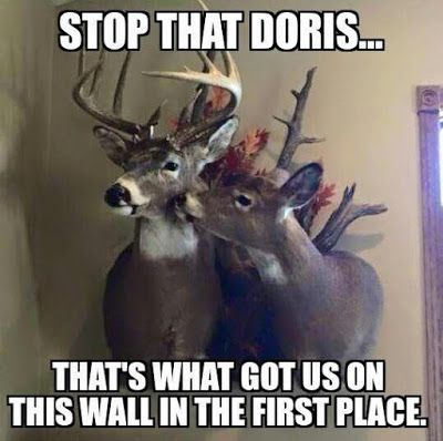 A Dixie Lady Deer Hunter: Stop That!!!