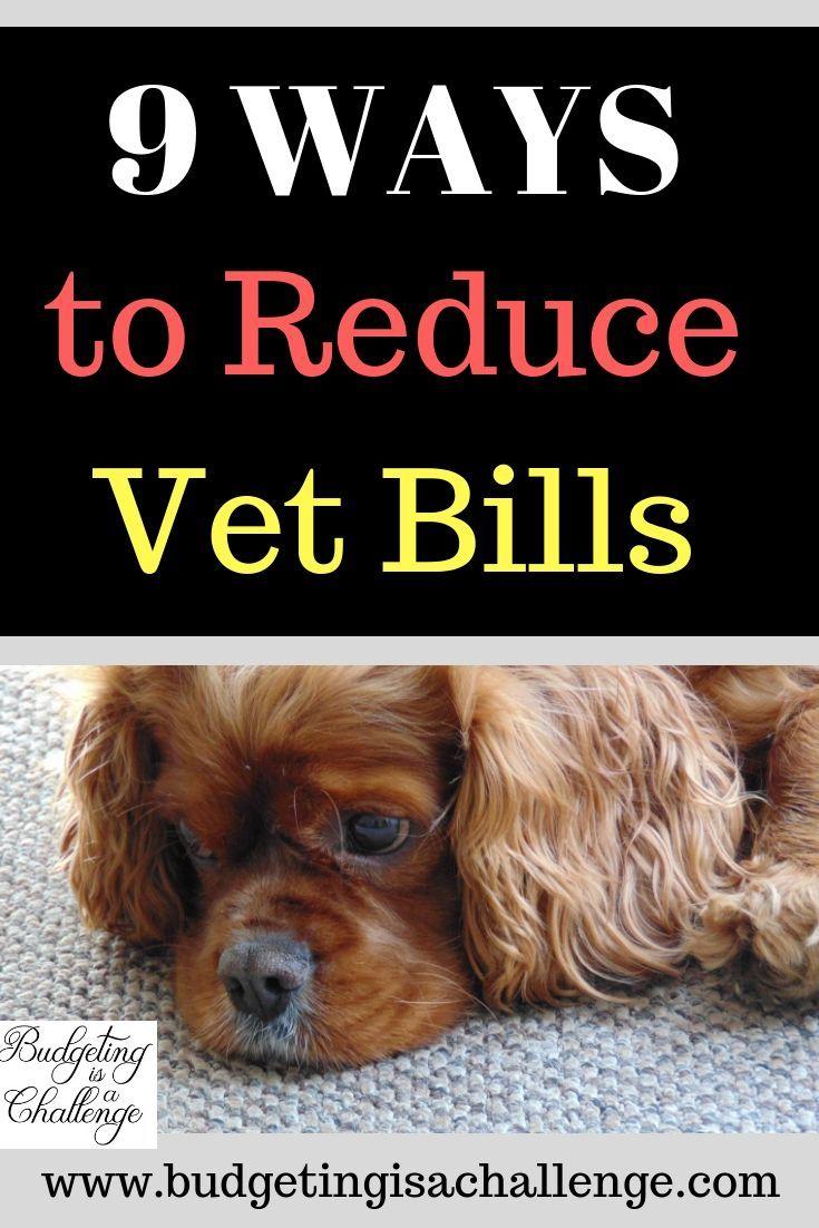How I Saved Money On Vet Bills Preventative Care Vetbills Preventativecare Puppy Vet Bills Saving Money Vets