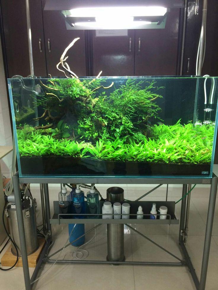 Simply ada aquatic world pinterest aquariums and freshwater aquarium - Petit aquarium design ...