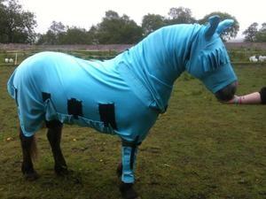 Snuggy Hoods for horses. Are you kidding me? http://www.ebay.co.uk/itm/Snuggy-Hoods-Bug-Body-Haint-Blue-/221127860188?pt=UK_Horse_Wear_Equipment=item337c3f5fdc#