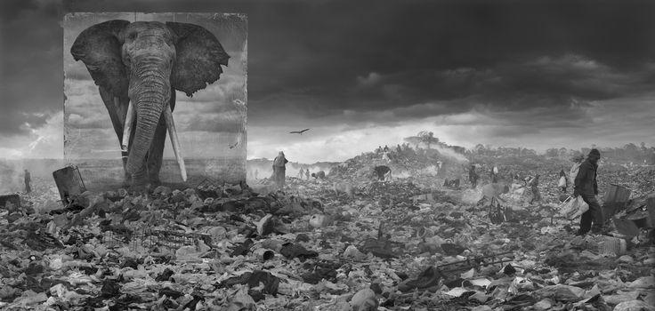 """""""Inherit The Dust"""" di Nick Brandt, come fantasmi gli elefanti tornano tra la polvere dei paradisi perduti dellAfrica. La mostra a New York (FOTO)"""