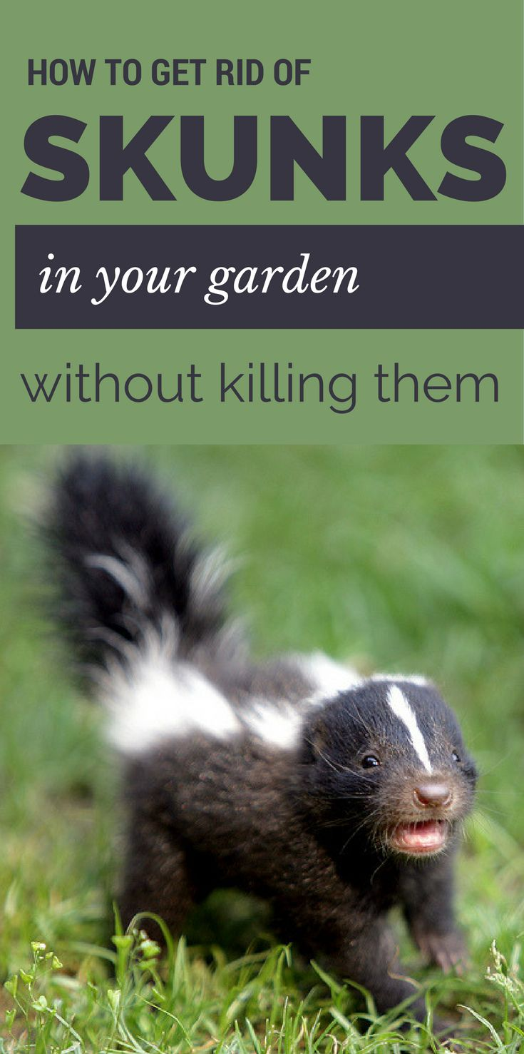 271 best good to know pest control images on pinterest pest