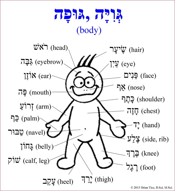 31 best hebrew worksheets images on pinterest hebrew school learn hebrew and languages. Black Bedroom Furniture Sets. Home Design Ideas